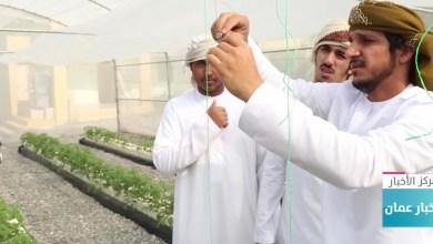 صورة بالفيديو: طلاب عمانيون ينجحون في الزراعة بدون تربة