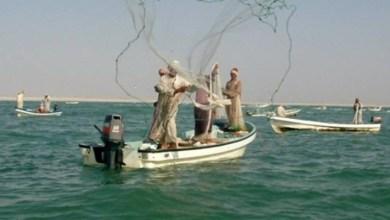 Photo of الشورى ينظر في مقترح استقدام العمالة الوافدة للصيد