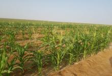 Photo of كالقمح والبطيخ والبصل: مزارعو نجد مُستعدّون للإنتاج الزراعي