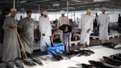 Photo of ارتفاع كميات الأسماك المنزلة بالصيد الحرفي بأكثر من 16%