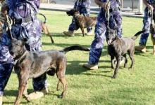 صورة كلاب شرطية تسهم في ضبط مخدرات بأحد الشواطئ