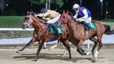 صورة مراكز جديدة مُتقدمة للخيول العُمانية على المضامير الإماراتية