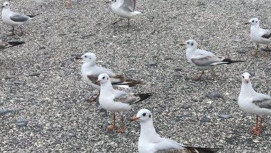 صورة بالفيديو: إنقاذ طائر في مسندم