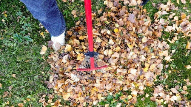 Raking Leaves Athelio Com