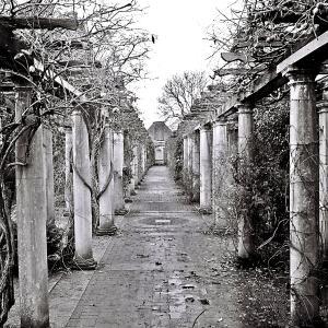 Photography Hampstead Heath