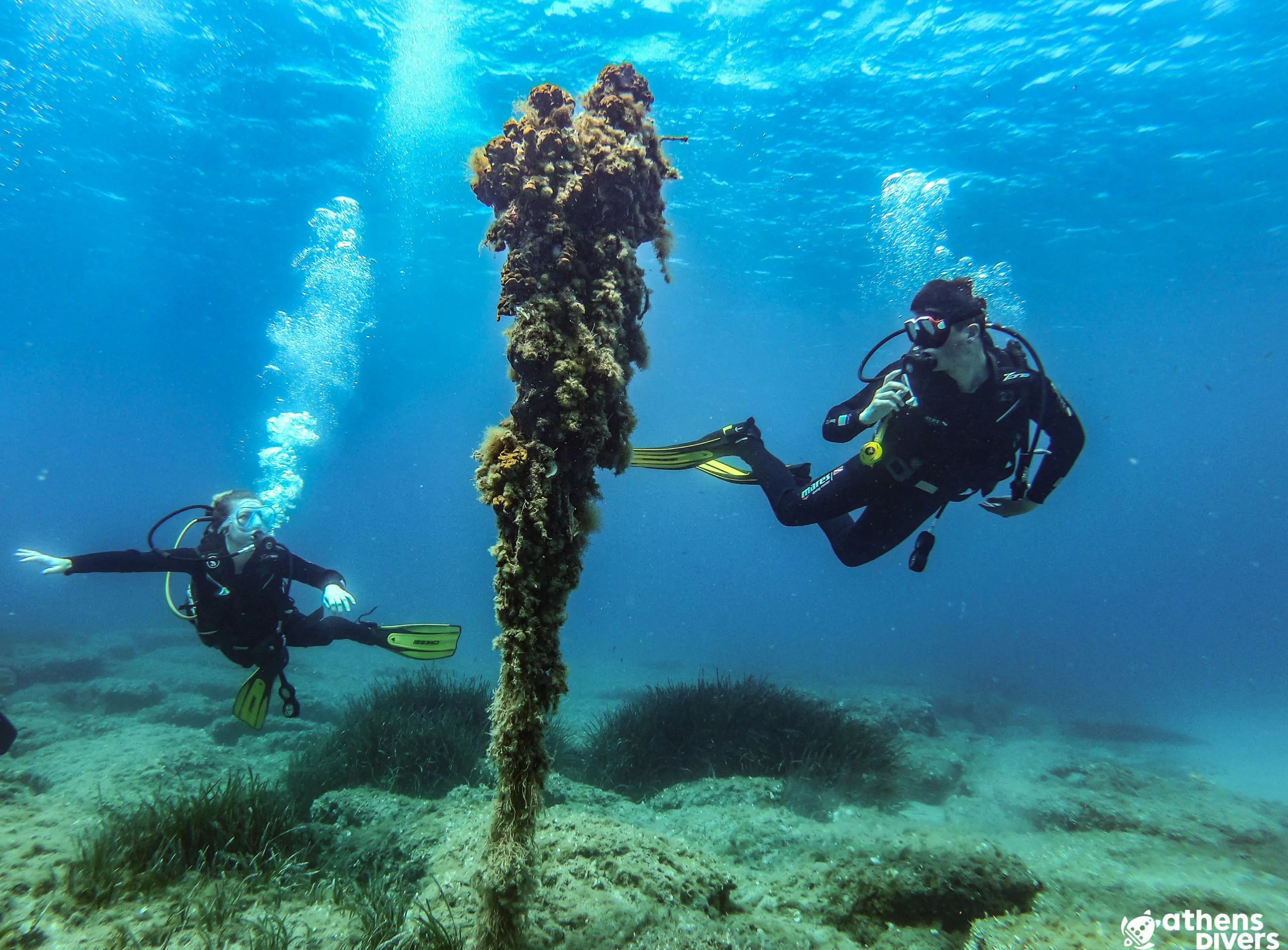 divers hovering around a rope with ongrowing life
