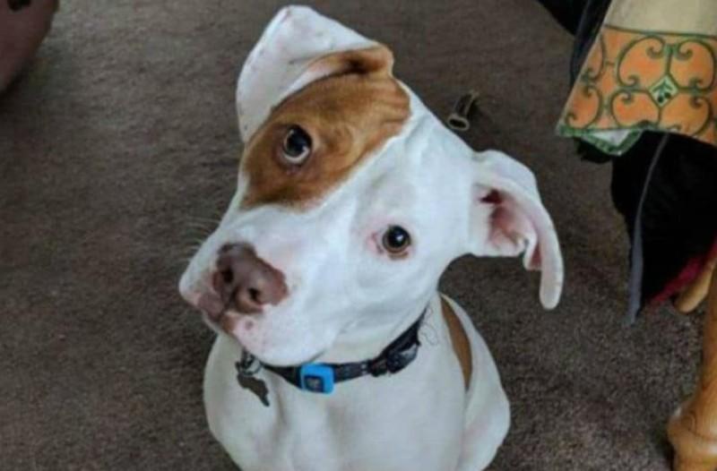 Μάθημα αγάπης! Υιοθέτησαν κουφό σκυλάκι και το έμαθαν να συνεννοείται με νοήματα (photos & video)