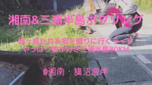 城ヶ島かねあ猫を撮りに行くライド・やっぱり猫が好き三浦半島ポタリング80km