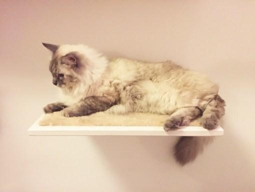 Mensola per gatti con tessuto peluche