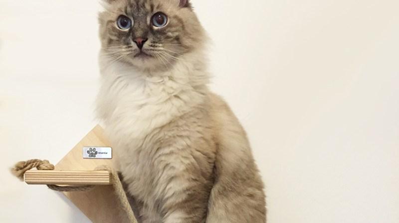 Scaletta per gatto
