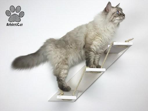 Scale per gatti