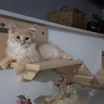 Arredamento per gatti in legno