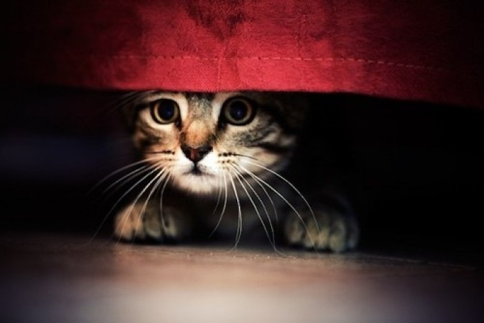 Gatto spaventato botti capodanno