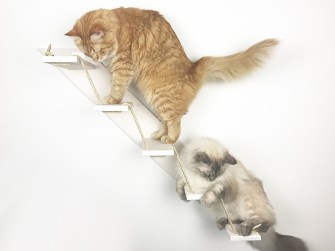 Scala per gatto bianca
