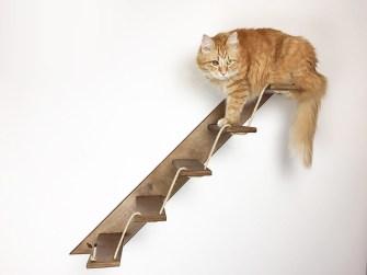 se un gatto ha vermi, gli umani possono ottenerlo
