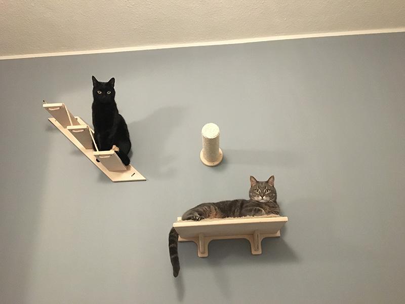 Parete per gatti di Chicco e Spillo