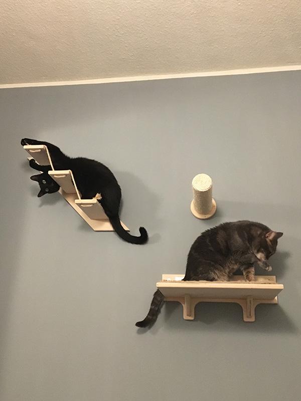 Parete per gatti con Spillo e Chicco