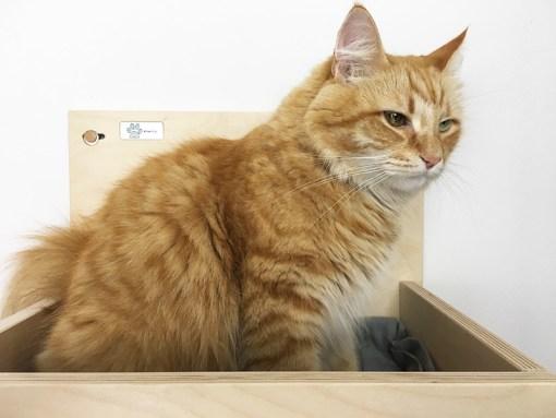 cuccia per gatti a muro