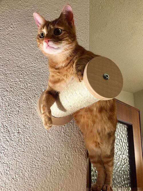 Arredo per gatti mirò