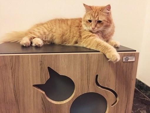 Litter Box Furniture