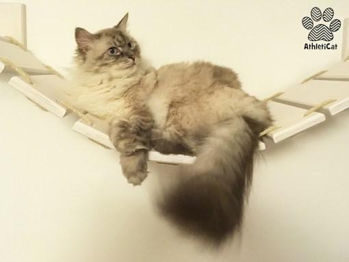 Cat bridge double version