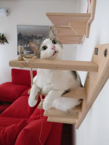 Ghost cat stair