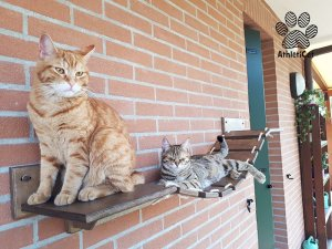 cats bridge wood