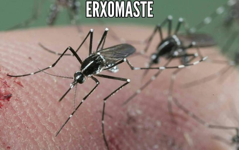 Έρχονται τα κουνούπια