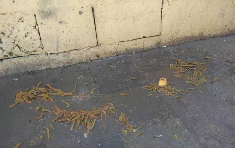 Φασολάκια στον δρόμο για …vegan σκύλους
