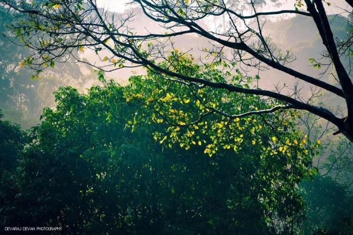 devaraj-devan-nellyampathi-photostories-athmaonline-014