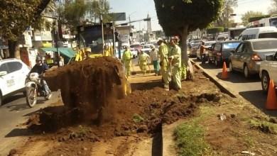 La Secretaría de Servicios Públicos, realiza diariamente acciones de mantenimiento, rehabilitación y rescate de áreas verdes del municipio