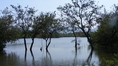 Luna García enfatizó que es fundamental velar por la conservación de estos sitios, que son reconocidos internacionalmente como generadores y conservadores de fauna silvestre y marina, además de oxígeno y agua