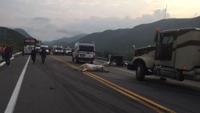 Personal de la Policía Federal realizó el peritaje del accidente y solicitó apoyo con grúas para poder maniobrar para retirar las unidades, quedando bloqueada la autopista por más de cuatro horas