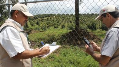 La inspección continúa para determinar posibles afectaciones a terceros por el uso de cañones