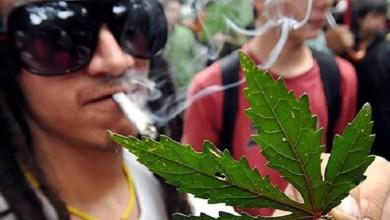Un reciente estudio del King´s College de Londres, la Universidad de Duke (Estados Unidos) y la Universidad de Otago (Nueva Zelanda) ha concluido que fumar porros en la adolescencia afecta al desarrollo del cerebro y deteriora las capacidades intelectuales a largo plazo