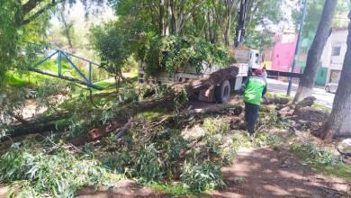 árboles caídos,Morelia
