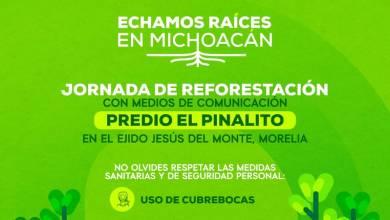 reforestación, El Pinalito