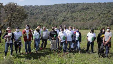 reforestación, CGCS