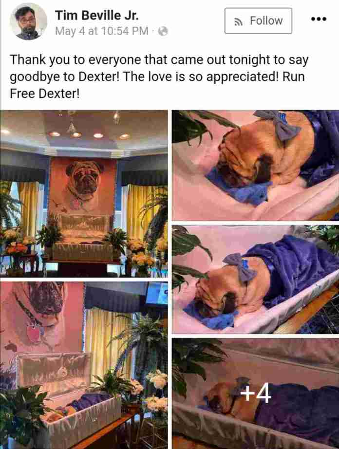 Man organizes posh burial for his dead dog, creates condolence register