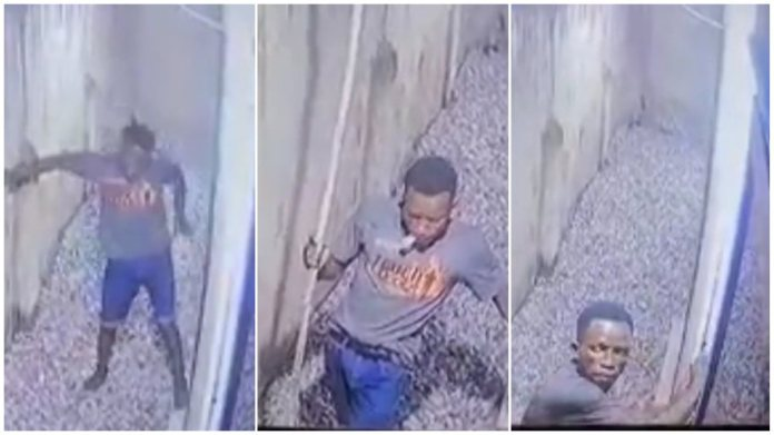 CCTV captures man with PhD in thievery stealing phone through victim's window