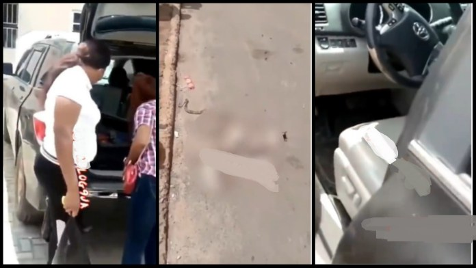 Shocking as 4 cats and a snake found in ladies SUV that she uses daily [Watch]