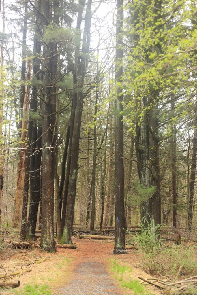 Kakiat Park forest