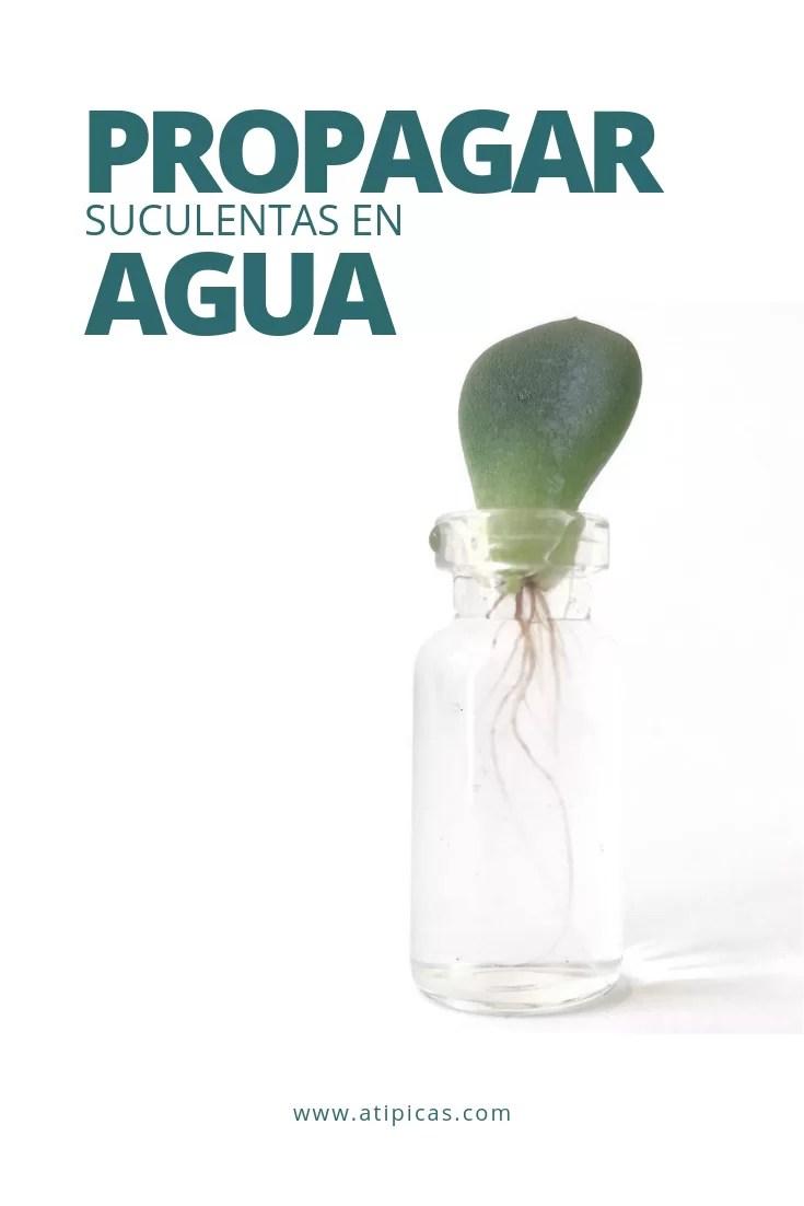 Cómo propagar suculentas en agua