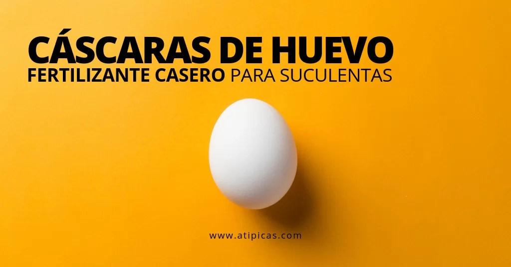 Cáscaras de huevo para suculentas