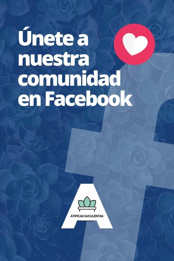 Comunidad o grupo de Atípicas Suculentas en Facebook