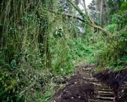 Climb San Pedro Volcano in Atitlan, Solola and Natural Reserve