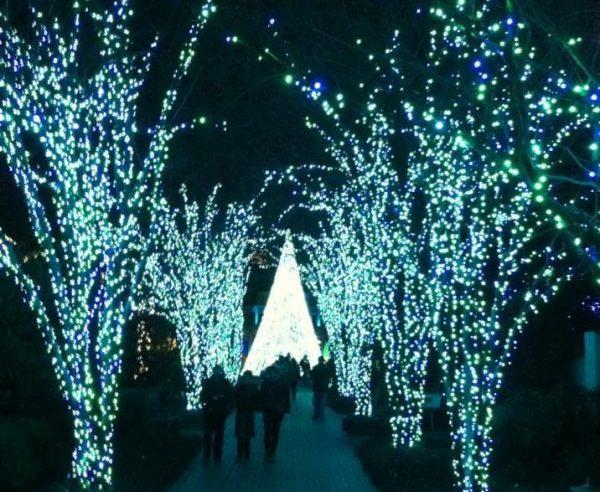 Discounts For Garden Lights Holiday Nights At The Atlanta Botanical Garden Now Open Atlanta On The Cheap