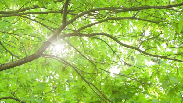 sunlight through tree branches