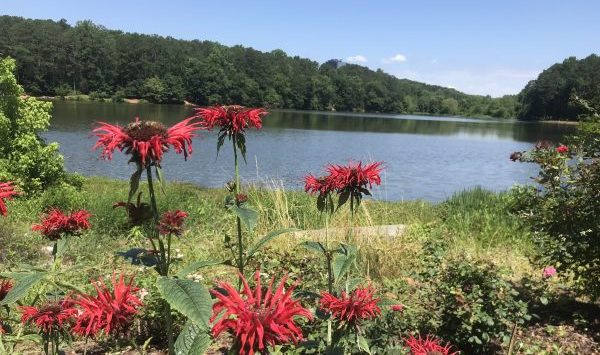 wildflowers at the lake