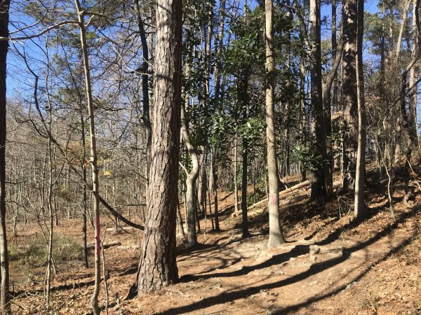 Nature trail at Murphey Candler Park